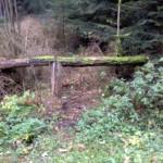 Göhrdetrail