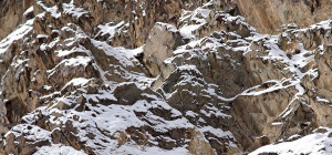 Schneeleopard